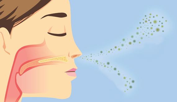 funcionamento da memória olfativa