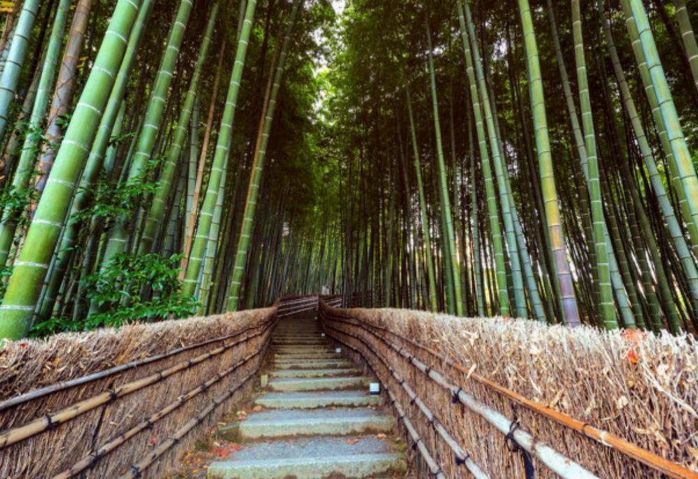 saiba mais sobre o bambu