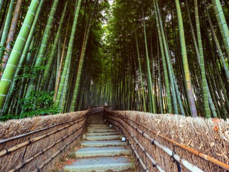 Conheça a origem e os significados do Bambu
