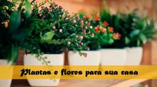 7 plantas e flores que trazem boas energias e cuidam da casa