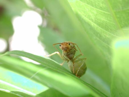 3 dicas caseiras para eliminar as formigas em casa