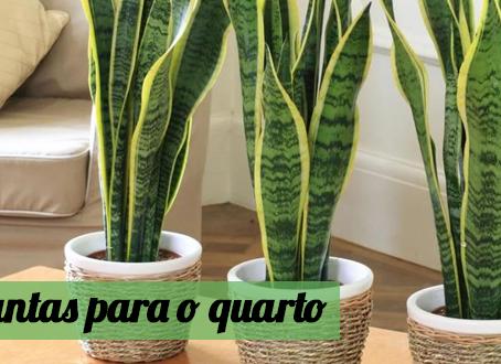 6 plantas para o quarto que vão melhorar o seu sono