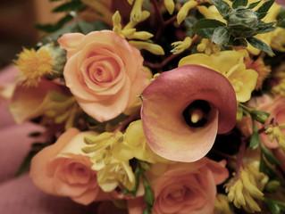 Flores de Outono: 5 plantas que combinam com a estação e como cuidar delas