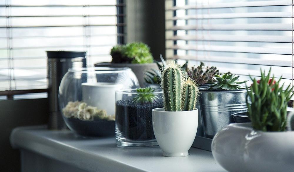 plantas que afastam energias negativas da casa
