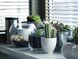 Conheça 7 plantas que afastam energias negativas da casa