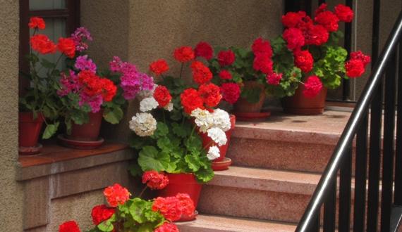 plantas e flores coloridas