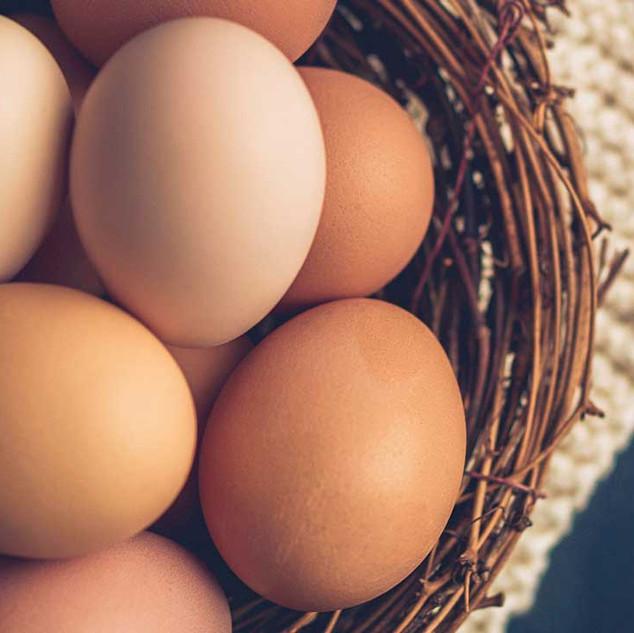 Telur / Eggs
