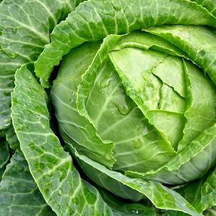 Kobis / Cabbage