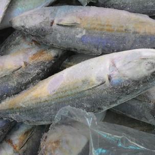 Ikan Kembung / Mackerel