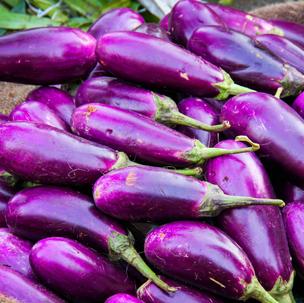 Terung / Eggplant