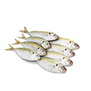 Ikan Selar / Yellowtail Scad