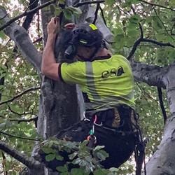 #treecare #treesurgeon #treeclimber #arb