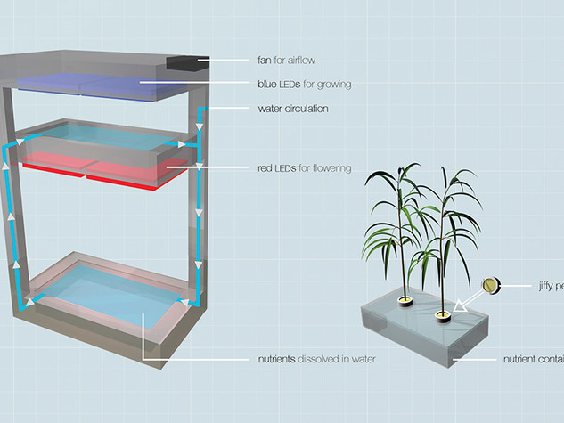 Hydro Box - Homegrowing system