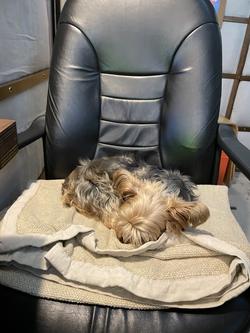 My Seat Warmer