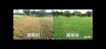 植保機、農藥噴灑、無人機、植保機稻熱病效果