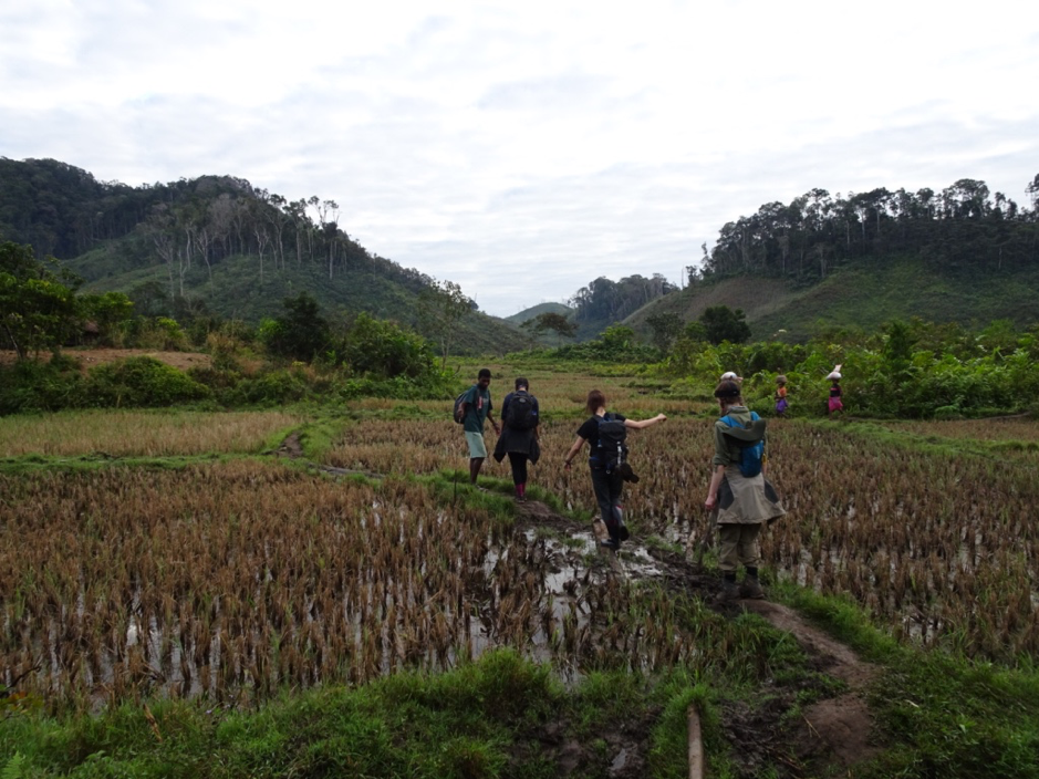 Trekking through the rice paddies of Mangevo Village. After so much rain it was very treacherous, and Pierre took to carrying a log to use as a bridge to help us vazaha to cross the worst parts…
