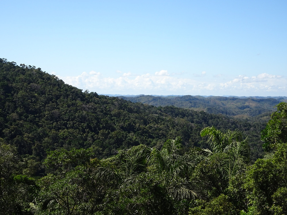 View looking out across Ranomafana National Park from Mangevo