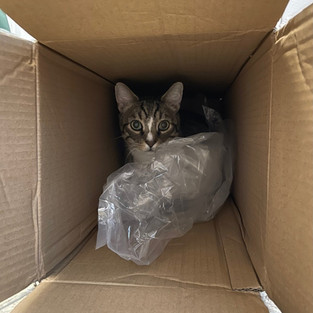 And here is Boots...in a box.