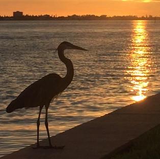 Karen says living in Gulfport is living in Paradise.