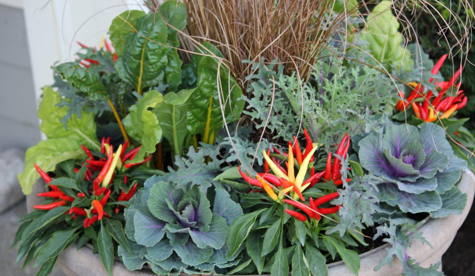 Fall Annuals Planter