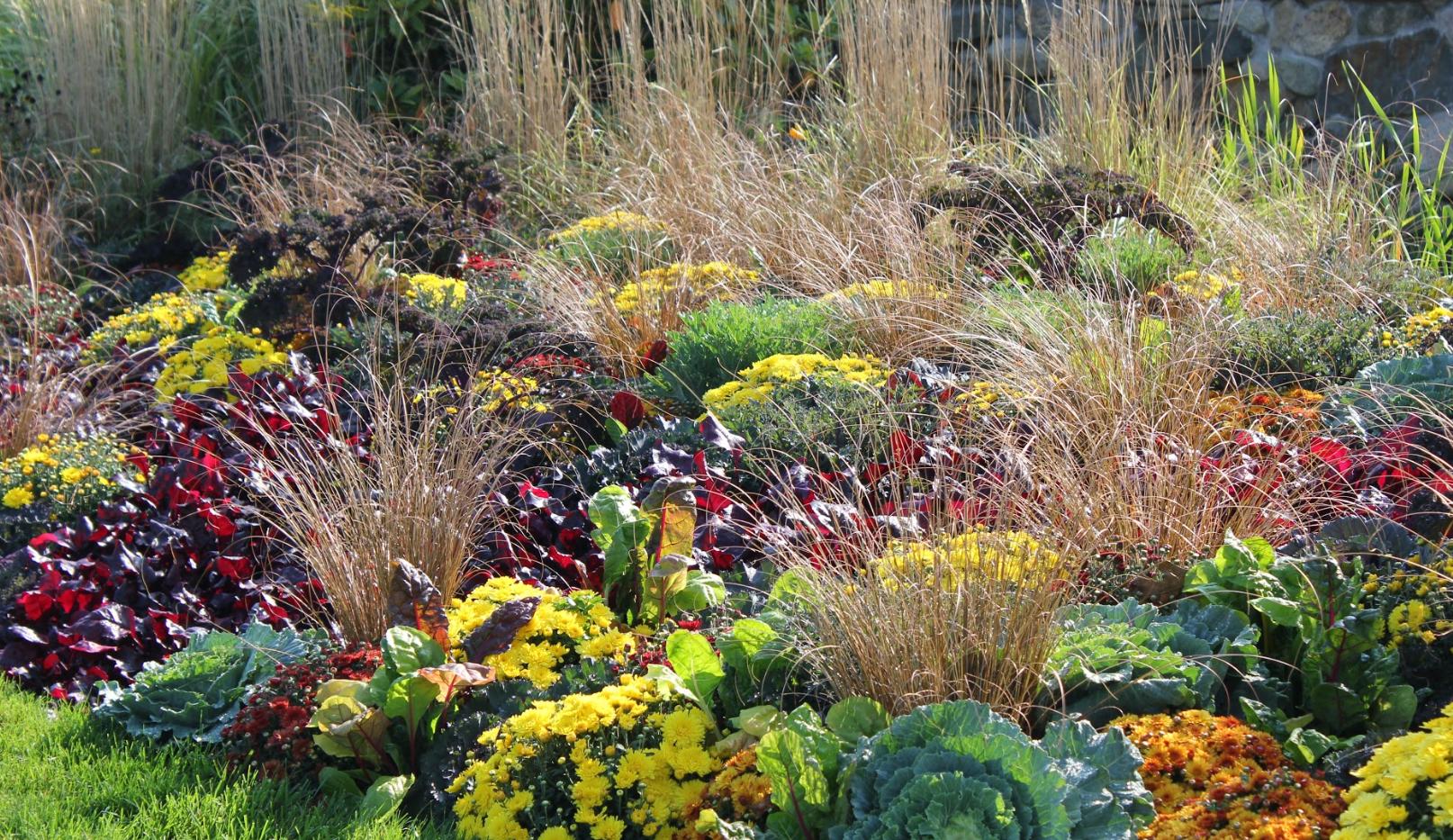 Fall Annuals