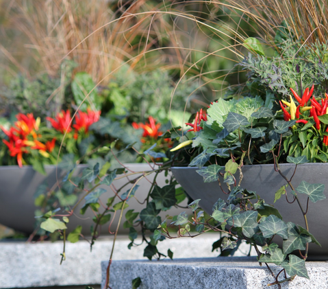 Fall Annual Planters