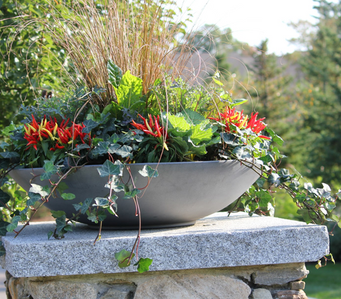 Fall Annuals Planter