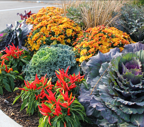 Fall Annuals Plant Bed