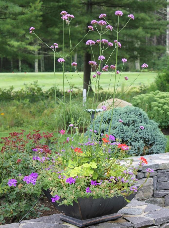 Summer Annuals Planter