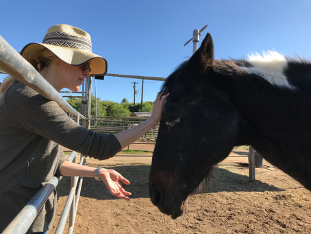 How Can Reiki Help Your Horse Heal?