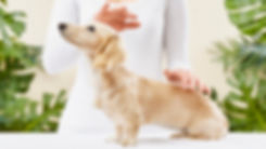 Reiki-for-pets_120817_VC6775-1-940x529.j
