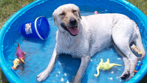 How To Find The Right Dog Swimming Pool