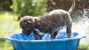 Summer Hazards for Dogs