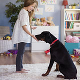 Little girl playing with dog at home .jp