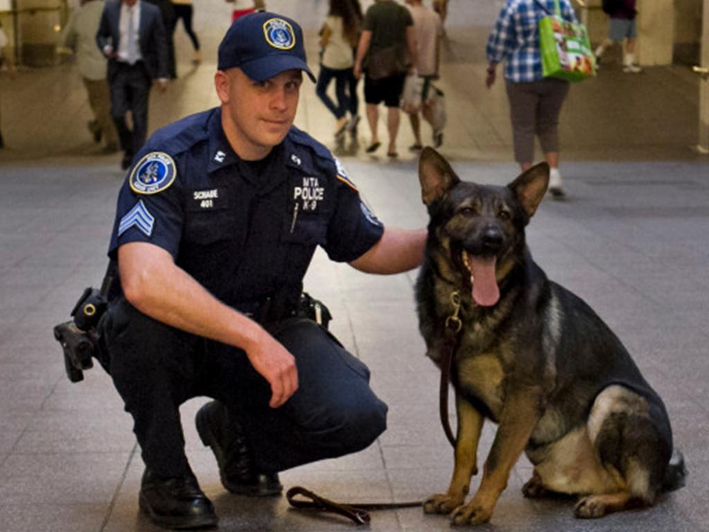 LIPTPS_Police_dog