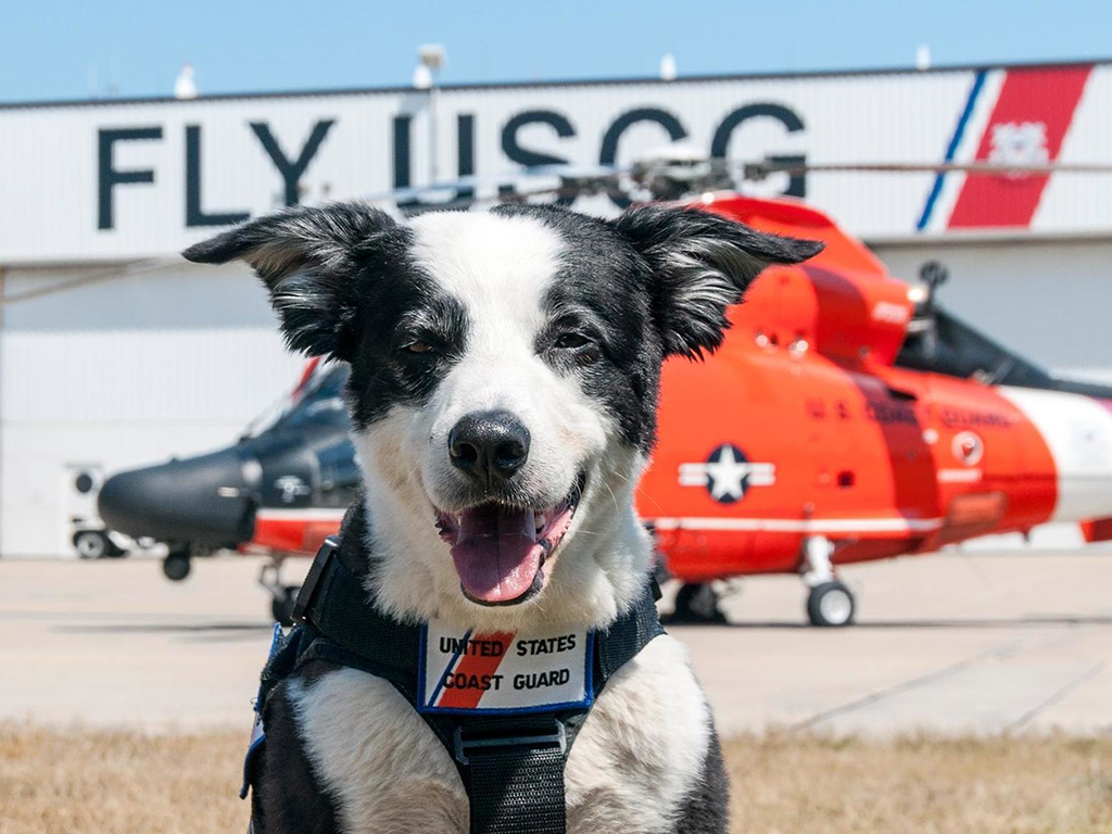 LIPTPS_Coast_Guard_dog