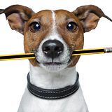 dog with pencil and eraser.jpg