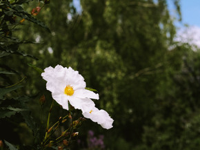 Visitacion Valley Greenway