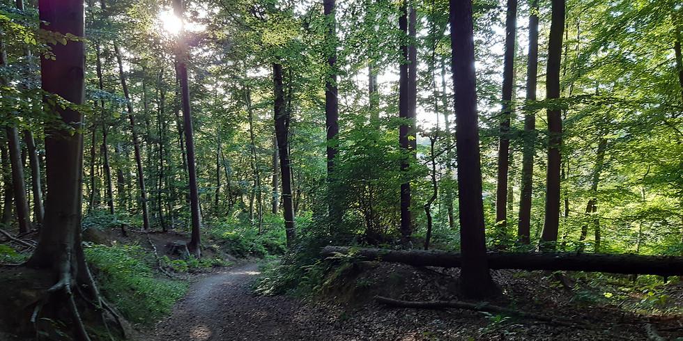 Cours de hatha yoga dans la forêt de Soignes