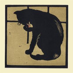 The Uncommon Cat