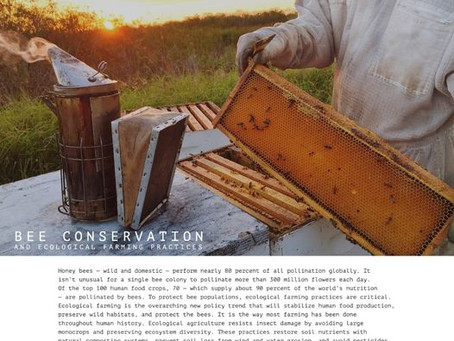Bee Conservation and Ecological Farming Practices | Photo Essay