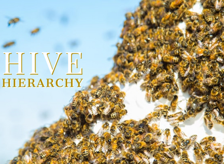 Hive Hierarchy