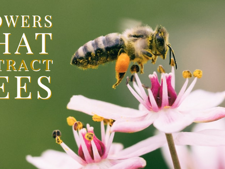 Flowers that Attract Bees: A Seasonal Guide