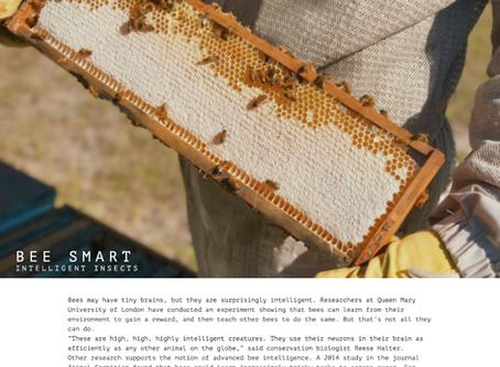 Bee Smart | Photo Essay