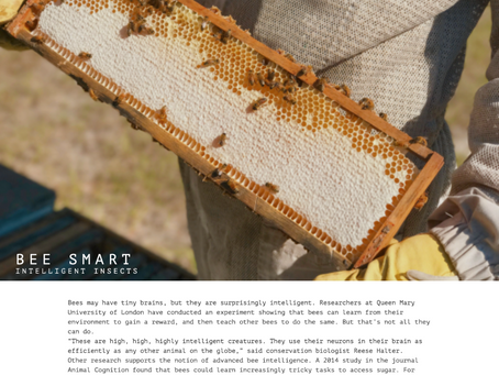 Bee Smart | Photo Essay