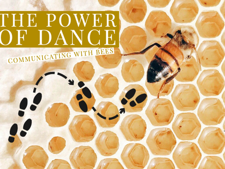 The Power of Dance: Communicating with Bees