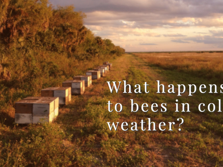 What happens to bees in cold weather?