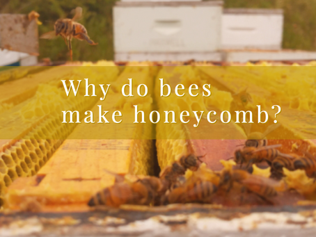 Why do bees make honeycomb?