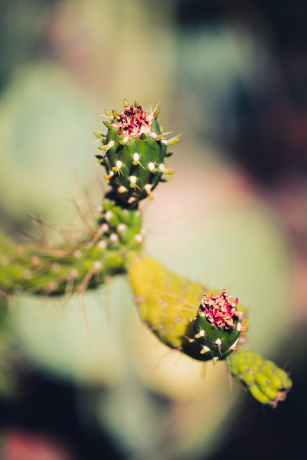 Arizona Garden9.jpg