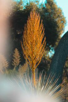 Arizona Garden3.jpg